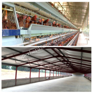 Steel Structure Open Chicken Production House in Tropical Area pictures & photos