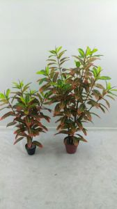 High Quality of Artificial Plants Crape Myrtle 249 Leaves Gu911093724 pictures & photos
