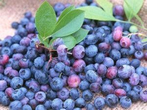 (European Bilberry Extract) -High Quality CAS 84082-34-8 European Bilberry Extract pictures & photos