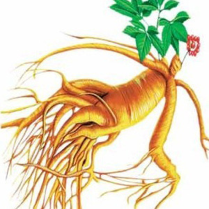 Ginseng Extract - Panaxoside Enhance Immunity