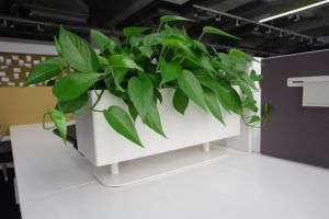 Uispair Flower Pot Home Office Hotel Garden Decoration pictures & photos