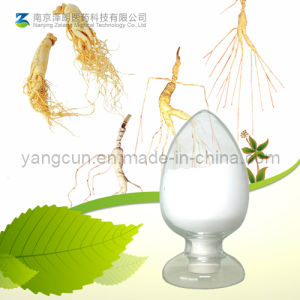Factory Supply 5%-80% Ginsenoside Ginseng Root Extract pictures & photos