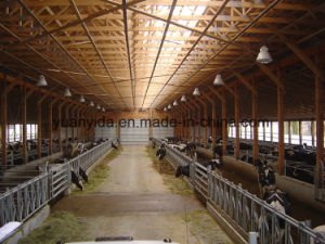 Hot Galvanized Strong Cattle Headlock pictures & photos