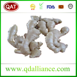Air Dry Ginger with Competitive Price pictures & photos