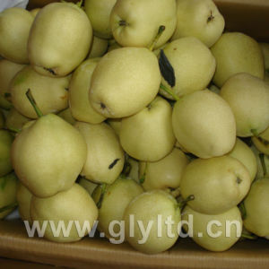 Sweet and Crisp Fresh Early Su Pear pictures & photos