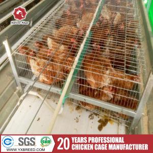 Chicken Manure Clean Machine pictures & photos