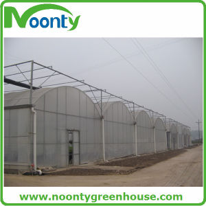 Free From Pests and Cold Durable Greenhouses pictures & photos