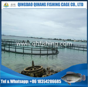 Aquaculture Equipment, Tuna Farming Fish Cage in The Sea pictures & photos