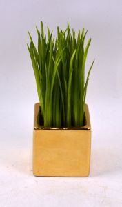 Handmade Nice Water Grass with Plating Ceramic Potted