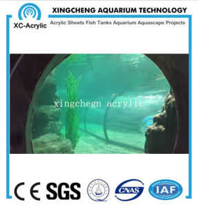 Customized Transparent Acrylic PMMA Fish Jar Project Price pictures & photos