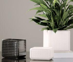 Square Glassy Surface Ceramic Flowerpot pictures & photos