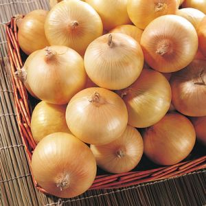 Fresh Yellow Onion (New Crop) pictures & photos