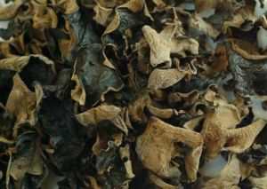 Edible Black Fungus 2