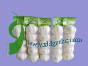 5p Garlic
