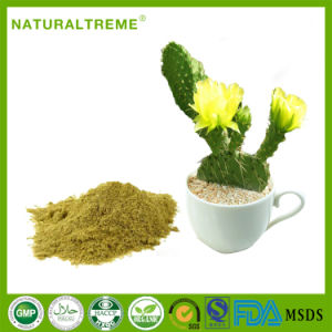 Top Quality Cactus Plant Extract Powder with Factory Price pictures & photos
