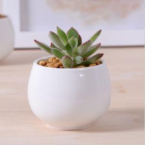 Creative Miniature Square White Ceramic Flowerpot pictures & photos