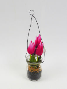 Amazing Handmade Hyacinth Plants with Hanging in Milk Bottle pictures & photos