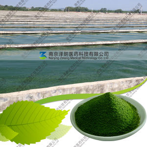 Manufacturers Wholesale Bulk Price Best Green Spirulina Powder pictures & photos