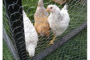 High Quality Rolls Chicken Wire Netting pictures & photos