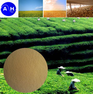 Zn Amino Acid Chelate Organic Nitrogen Vegetable Source Amino Acids pictures & photos