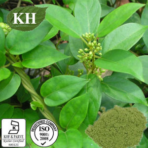 Kingherbs Natural Gymnema Extra Acid 25 75% by HPLC; pictures & photos