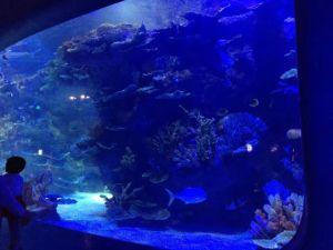 Large Transparent Plexiglass Fish Tank pictures & photos