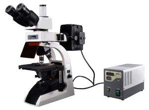 Bestscope BS-2072FT Fluorescent Biological Microscope pictures & photos