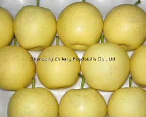 Chinese Fresh Ya Pear with Good Price pictures & photos