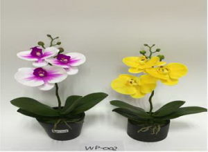 Best Selling 2heads Orchid Flower Gu-Jys162913 pictures & photos