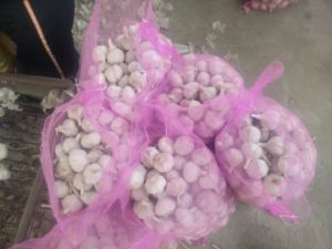 professional Exporting Company for Garlic of Hometown pictures & photos