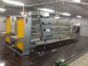 Full Set Low Cost Automatic Layer Feeding Equipment for Layer Cages pictures & photos