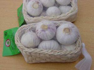 Garlic (02)