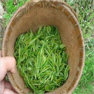 100%Nature White Tea Extract with Tea Polyphenols EGCG Catechins pictures & photos