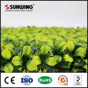 Environmental Protection Outdoor Artificial Box Hedge Plants for Decor pictures & photos