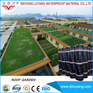 Factory Supply Top Quality Root Resistance Sbs Modified Bitumen Waterproof Membrane for Green Roof Garden pictures & photos