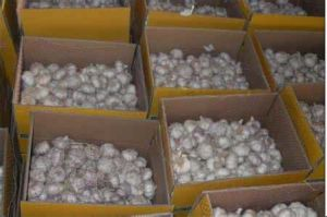 Pure White Garlic for Exporting pictures & photos