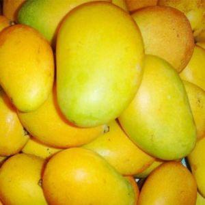 Irvingia Gabonensis (mango) Seed Extract pictures & photos