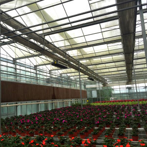 Low Cost China Multifunction High Quality Glass Greenhouse for Flower pictures & photos