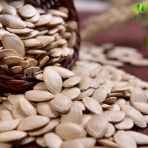 Most Popular Shine Skin Pumpkin Seeds 10-11cm for Export pictures & photos