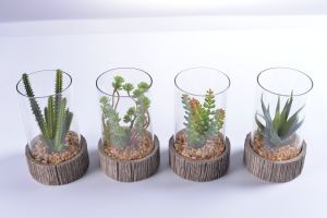 Gift of Mini Succulent in Glass Vase Withstand Cement Holder with Mini Rock pictures & photos