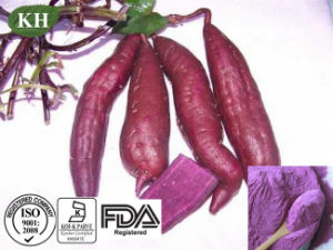 100% Natural Protect Liver Purple Potato Extract Powder pictures & photos