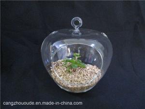 Transparent Plant Hanging Decorative Glass Vase pictures & photos