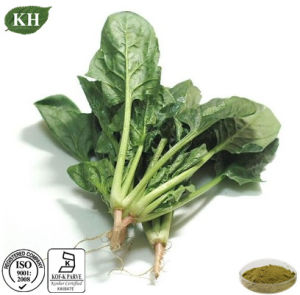Natural Health Spinach Extract 5% Beta Ecdysterone pictures & photos