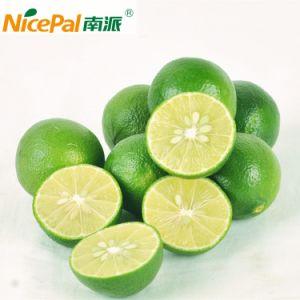 100% Natural Lime Fruit Juice Powder/Halal Certified pictures & photos