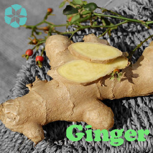 Ginger Extract / Zingiber Officinale Extract / Gingerols