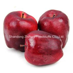 2015 New Fruit Fresh Huaniu Apple pictures & photos