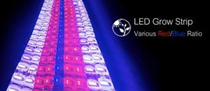 UL Listed 10mm PCB 60LEDs/M LED Grow Light Strip pictures & photos