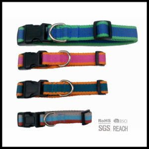 Cheap Wholesale Pet Cat Dog Collar with Multi Tone Webbing pictures & photos