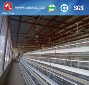 Baby Broiler Chicken Cage for Poultry Farming pictures & photos