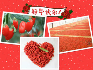 ISO 9001 Dry Fruit--Goji Berry pictures & photos